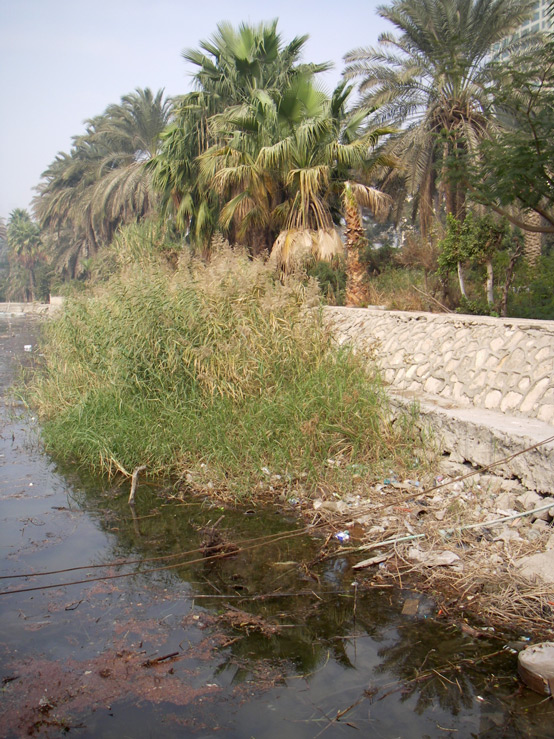 Unused vegetated terraces along the floodplain in Maadi.